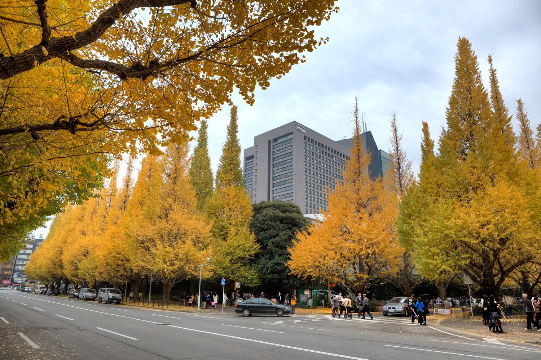 Fall-Colors-2010-11-22-G741234HDR.jpeg